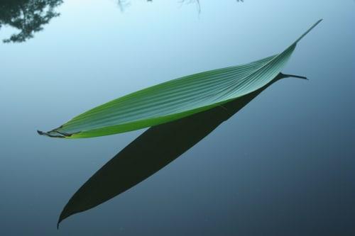 Photography by Strijdom Van Der Merwe seen at White River, White River - Floating leaf