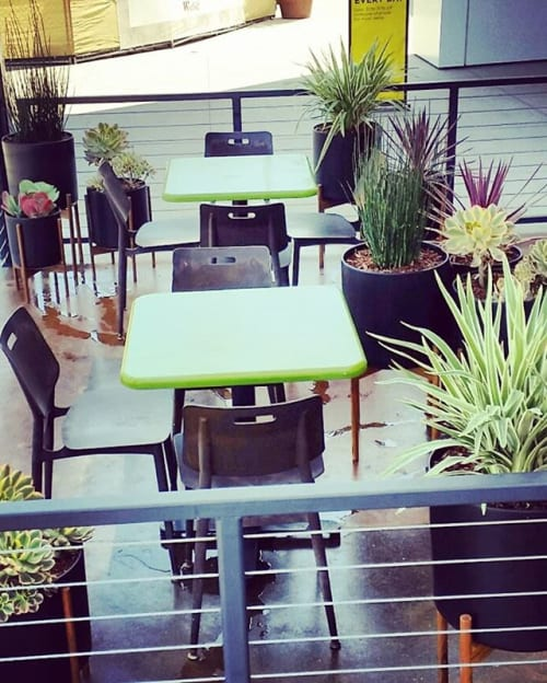 Plants & Landscape by Botanika Interior Plantscapes seen at Tender Greens, San Diego - Tender Greens patio