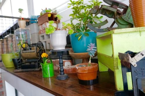 Plants & Flowers by Lauren O'Neill (Scout Interiors Design) at Avanti Food and Beverage, Denver - Succulent Garden