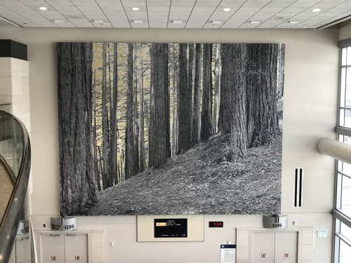 Paintings by Alice Shaw seen at San Francisco International Airport, San Francisco - No Other Lands Their Glory Know (2017)