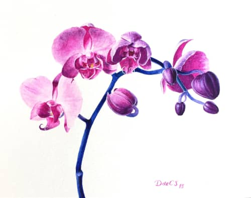 Watercolor Orchids   Paintings by Daniela de Castro Sucre   Private Residence in Pensacola