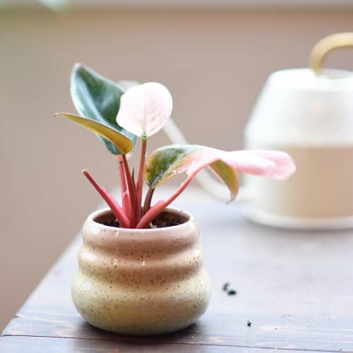 Rainbow Pot | Vases & Vessels by Mud Witch by Viviana Matsuda | And Their Plant Stories in Seattle
