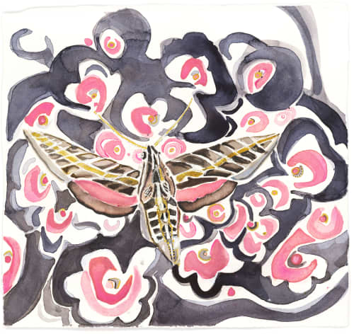 Paintings by ISA CATTO STUDIO - Sphinx Moth