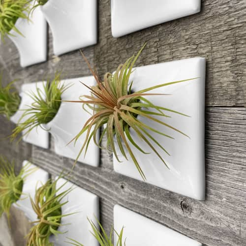 Node 3 Inch Ceramic Wall Planter Airplant Holder   Vases & Vessels by Pandemic Design Studio
