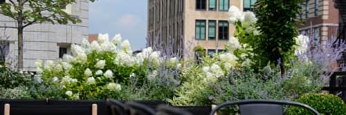 Harrison Green - Plants & Flowers and Plants & Landscape