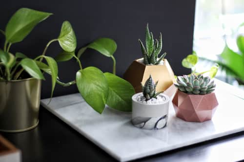 Mind The Minimal - Plants & Flowers and Planters & Garden