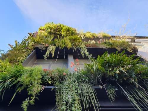 Fytogreen Australia - Plants & Flowers and Plants & Landscape