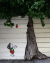 Street Murals by Lindsey Millikan (Milli) seen at Private Residence, San Francisco - Giving Tree Mural